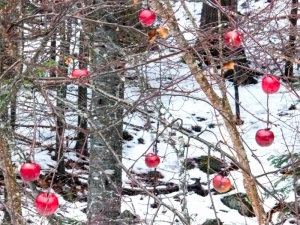 Apples bright against the winter's tangled wood.