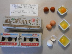 "Real free-ranged, organic eggs compared to store bought regular and ""organic"" eggs."