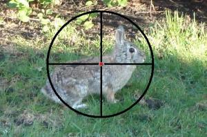 rabbit crosshairs