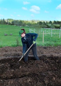 Digging the potato beds.  A hard, tedious but essential step on the road toward wholesome food.