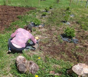 Natalia weights down makeshift ground cover with stones to shield if from the spring wind.