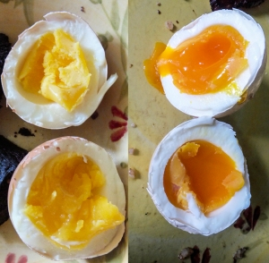 Store-bought organic eggs (left) vs. real organic eggs (right).