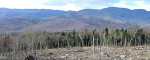 "Clearcutting in Vermont to feed one of their new ""green"" biomass generators."