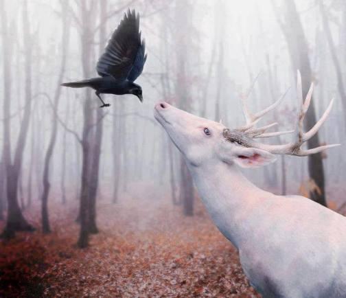 white stag raven