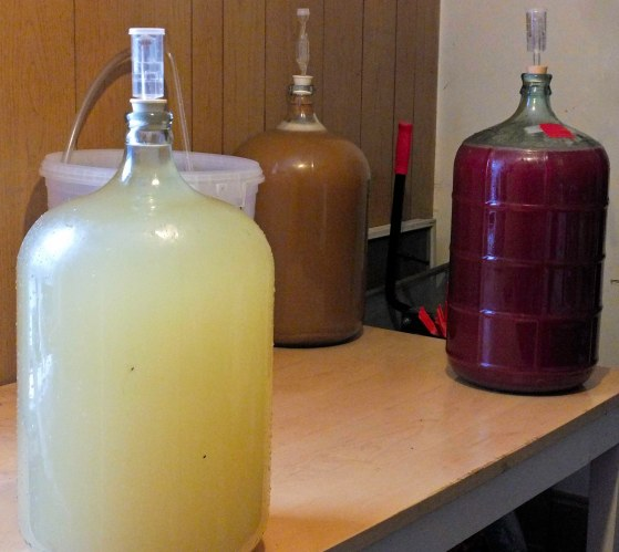 In the image are: Muscat in the foreground (ready to bottle next week), elderberry wine in a Riesling base back right (about a month til bottling), and scrumpy at back left made from some unpasteurized whole pressed apple cider I found on clearance a couple weeks back.