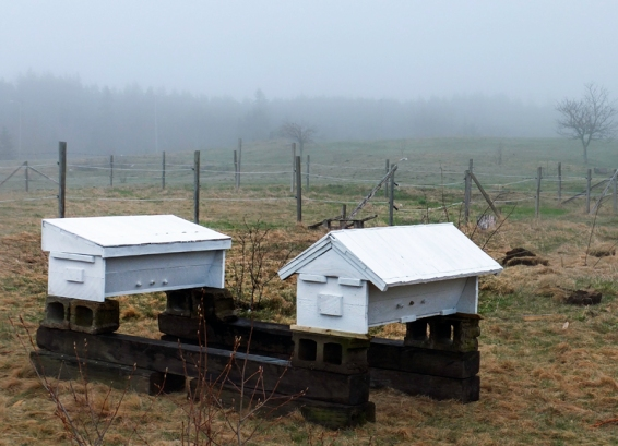 apiary small