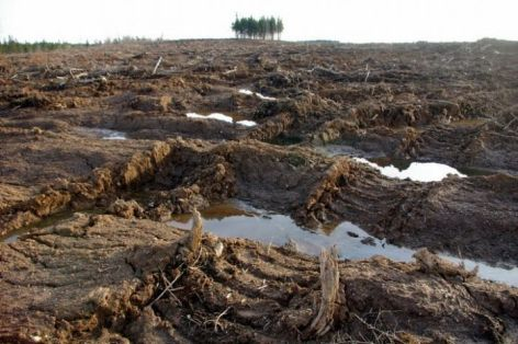 And here is one of the NS government's supposedly sustainable biomass fuel clear cuts from the ground.  Every living thing has been ripped from the soil, right down to the soil.  Soon the top soil will wash away.  This land is devastated and will take many centuries to heal, if left alone.