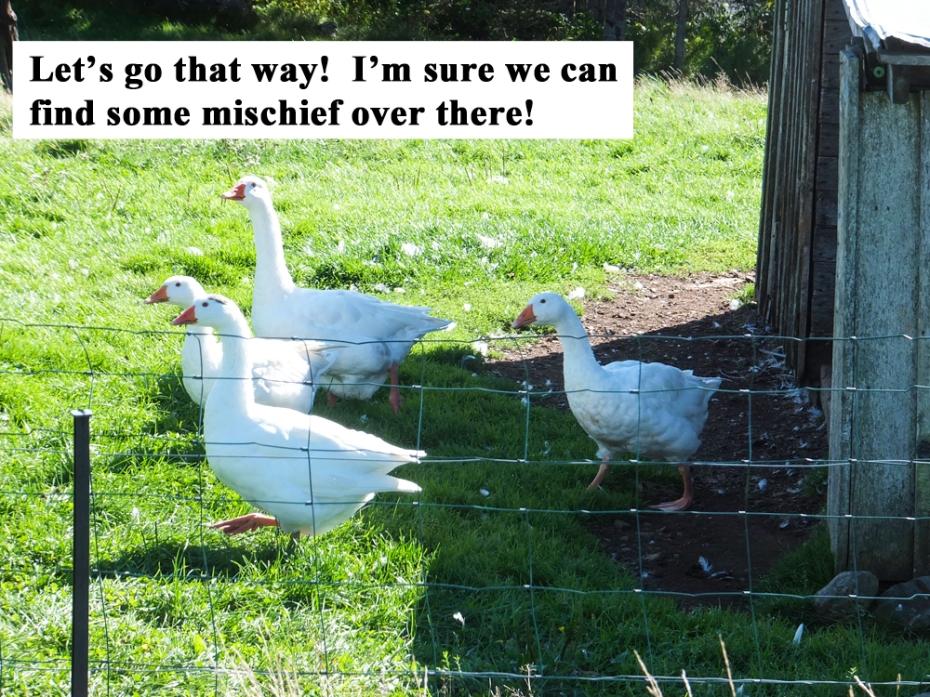 goose mischief small