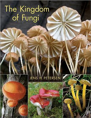 kingdom of the fungi