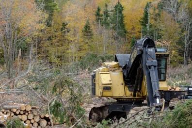 nova scotia forestry