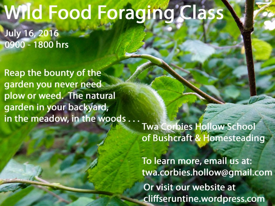 wild food foraging class July 2016 small